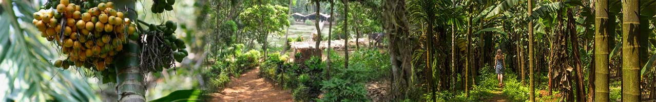 Spice Plantations scattered around the interior of Goa's beautiful rural landscape